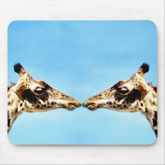 Giraffes touching noses mouse pad