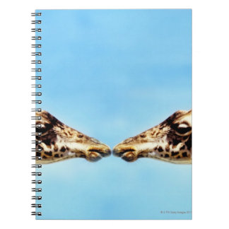 Giraffes touching noses note book