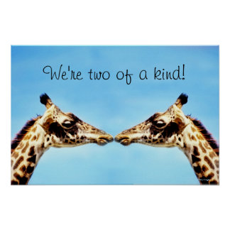 Giraffes touching noses poster