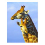 Giraffes under blue sky postcard