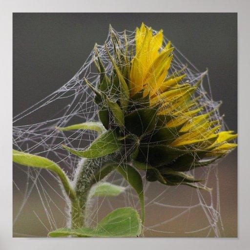 Girasol adornado por una impresión de Spiderweb Impresiones