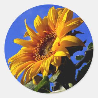 Girasol amarillo brillante pegatina redonda