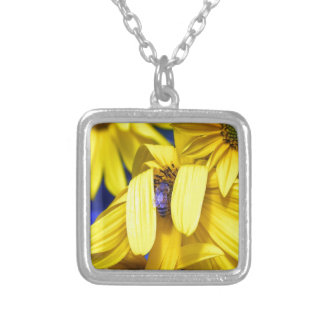 Girasol amarillo, collar azul de la abeja