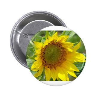 Girasol amarillo de la sol pin