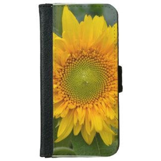 Girasol amarillo carcasa de iPhone 6