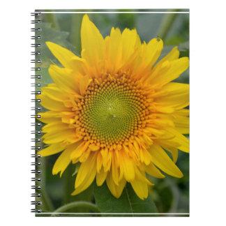 Girasol amarillo cuaderno