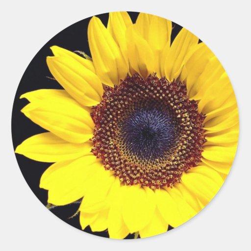 Girasol amarillo pegatina redonda