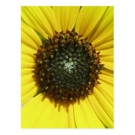 Girasol amarillo postales