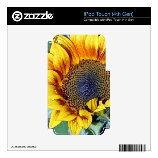 Girasol con las gotitas de agua iPod touch 4G skins