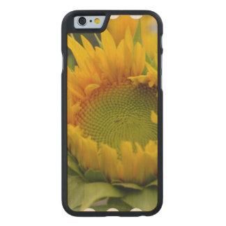 Girasol de florecimiento funda de iPhone 6 carved® slim de arce