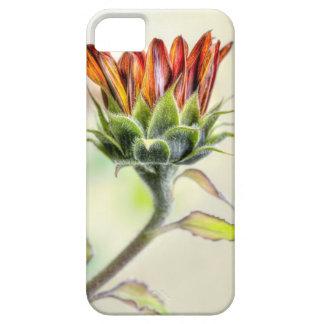 Girasol de florecimiento iPhone 5 carcasas