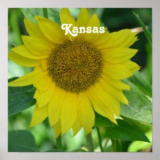 Girasol de Kansas Posters