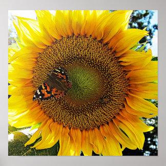 Girasol de la mariposa póster