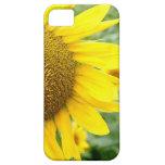 Girasol de los casos del iPhone 5 de la flor iPhone 5 Carcasa