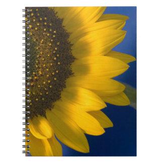 Girasol en el cuaderno espiral azul