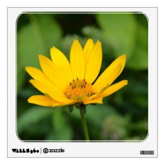 Girasol falso floreciente