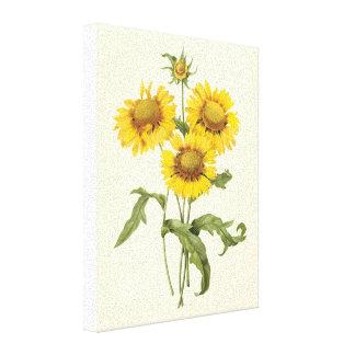 Girasol floral de la flor combinada del vintage po impresión en lona estirada