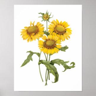 Girasol floral de la flor combinada del vintage po posters