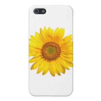 Girasol, girasol iPhone 5 carcasas