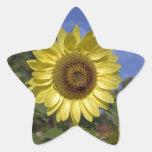 Girasol perfecto del verano en cielo azul pegatina en forma de estrella