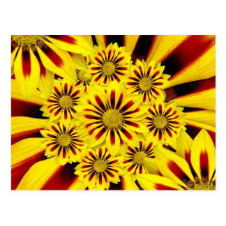 Girasol rayado amarillo y rojo de la margarita del postal
