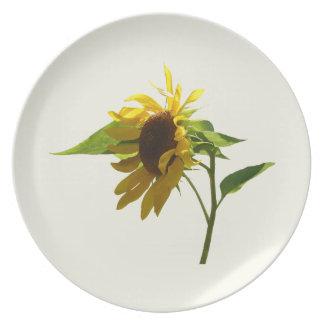 Girasol retroiluminado platos de comidas