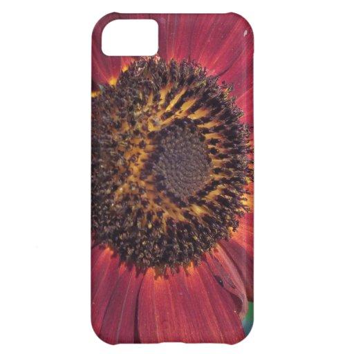 Girasol rojo carcasa iPhone 5C