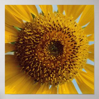 Girasol soleado - cierre amarillo gigante del impresiones