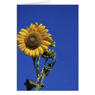 Girasol solitario tarjeta de felicitación