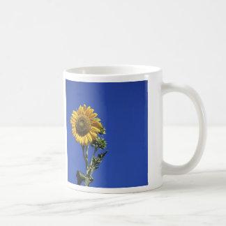 Girasol solitario taza