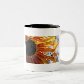 Girasol Tazas De Café