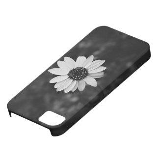 Girasol temático, una imagen blanco y negro de A S iPhone 5 Carcasas