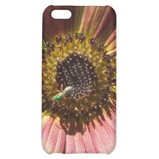 Girasol y la caja verde del iPhone 4 de la abeja