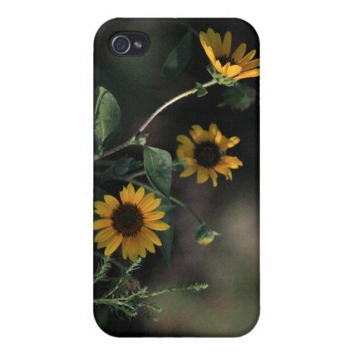Girasoles 4/4s iPhone 4 protectores