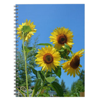 Girasoles amarillos hermosos libros de apuntes