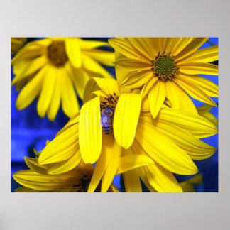 Girasoles amarillos, poster azul de la abeja