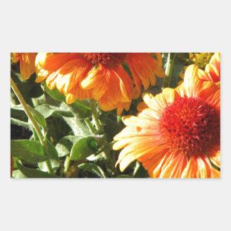 Girasoles anaranjados rectangular pegatina
