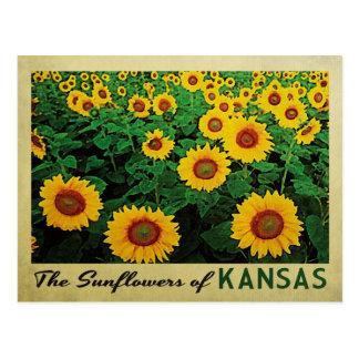 Girasoles de Kansas Tarjeta Postal