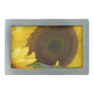 Girasoles en la floración hebillas cinturon rectangulares