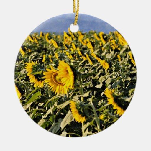 Girasoles, flores de Toscana, Italia Ornato