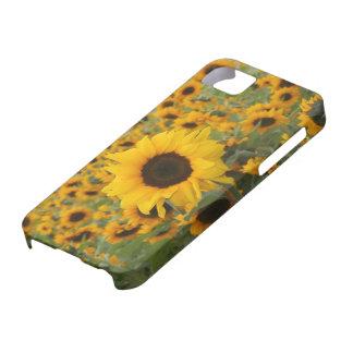 Girasoles iPhone 5 Protector