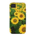 Girasoles iPhone 4/4S Carcasas