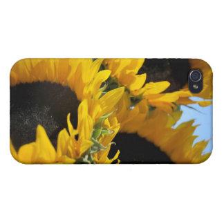 Girasoles iPhone 4/4S Fundas