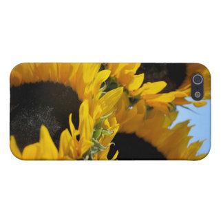 Girasoles iPhone 5 Carcasas