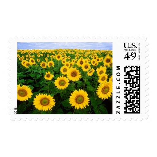 Girasoles para siempre timbres postales