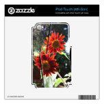 Girasoles rojos iPod touch 4G skin