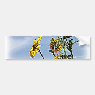 Girasoles salvajes pegatina de parachoque