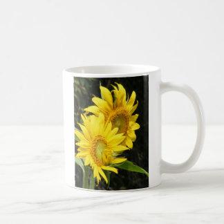 girasoles tazas de café