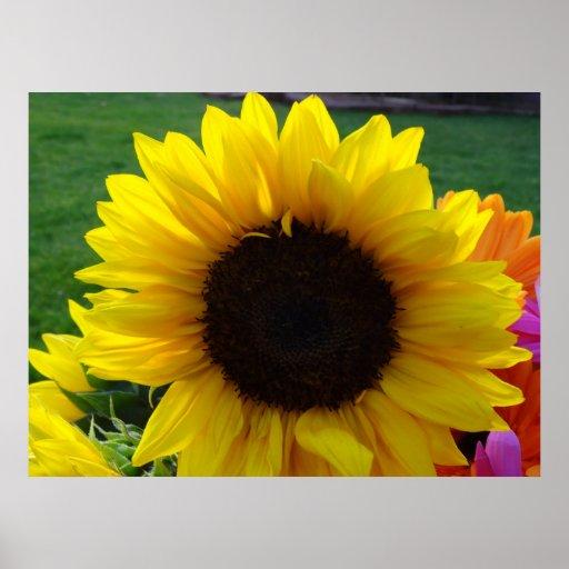 Girasoles y sol (2) impresiones
