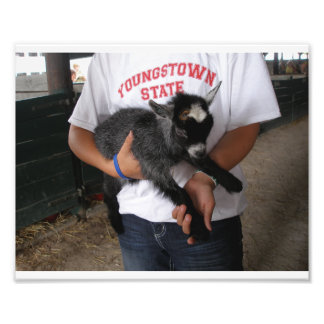 Girl at County Fair Holding Baby Goat Photo Print